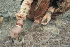 IN004S19 World Bank (World Bank Photo Collection) Tags: india hands seeds soil dirt agriculture planting worldbank southasia