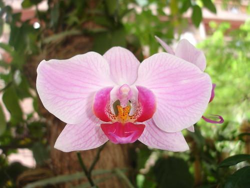 Orquídea by Chrismferreira
