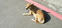 23.悠閒曬太陽的狗