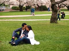 櫻花樹下甜蜜小情侶