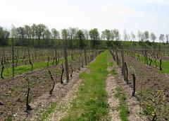 Vineland Winery