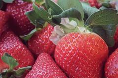 Fresh Strawberries (amarilloladi) Tags: red seeds fruit blossoms strawberries 7dwf macro