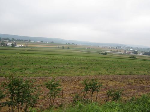 Amish fields