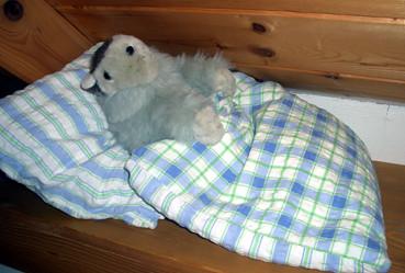 Schlafendes Murmeltier rustikales Schlafzimmer
