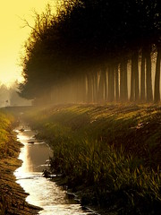 Soliera (@lugli) Tags: autumn italy italia tramonto sunsets natura ombre tramonti ocasos naturesfinest treesubject diamondclassphotographer italianflickrworld atardeceryamanercer