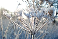 Magic and sparkle.......... (ANDI2..) Tags: uk winter macro nature beautiful frost searchthebest magic sparkle cumbria wonderland frosting merrychristmasdearfriend