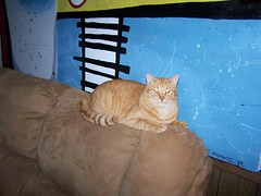 The Cat and Dog Chronicles (bonkrood) Tags: dog cat couch jinx