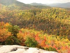 Fall Color (mwandrews) Tags: nature mwa bestnaturetnc07 photocontesttnc08