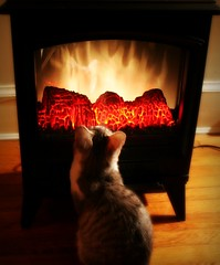 like moths to a flame (phoebe reid) Tags: cat fire fireplace kitten space tabby flames gray heater makebelieve easilyamused henrietta aroundthehouse blueribbonwinner