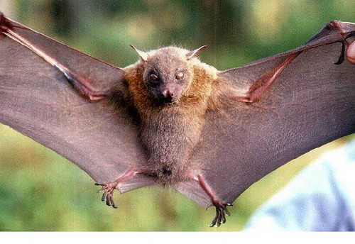 2229971147_aa28ae357f - CRAZY ABOUT BATS! - Science and Research