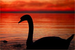 ... ( iSpirit ) Tags: sunset sky lake nature silhouette stone swan waves horizon badge thirst catchycolorsred nikond200 cotcmostfavorited supershot 25faves mywinners specialpicture aplusphoto superbmasterpiece diamondclassphotographer flickrdiamond ambientlightgroup excellentphotographerawards flickrelite afnikkor50mm114d naturewatcher wwrhungary mymessageinpicture thewanderlust