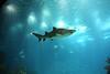 Finding Nemo... eh!eh! (RiCArdO JorGe FidALGo) Tags: portugal lisboa twoyears oceanáriodelisboa pffg canoneos400ddigital câmeradeourobrasil peixanário fidalgo72 jalalspagesmarinelifealbum ricardofidalgo ricardofidalgoakafidalgo72 pffgpeixes200803