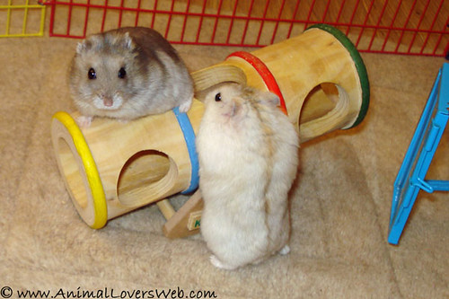 Nutmeg & Pebbles Playing On See-Saw by AnimalLoversWeb.
