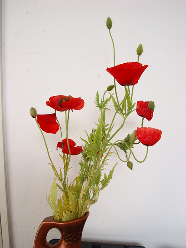 poppies opens before my eyes (13)