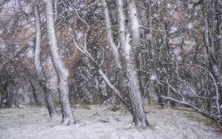 Narnia [EXPLORED]
