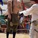 Renaissance Faire 2009 080
