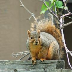 Backyard Resident