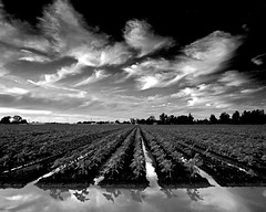 Central Valley impressions (ue06) Tags: sky cloud white black field clouds woodland farm feather conservation heartland valley crop watershed land sacramento agriculture davis solano soe agricultural yolocounty centralvalley cachecreek putahcreek yolo 123bw b38w black38white bwphotoaward diamondclassphotographer flickrdiamond