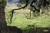 MI_40 (MULTIMAGENS) Tags: natureza caminhada ecologica