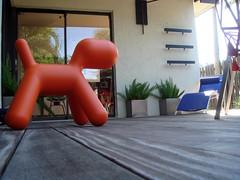 DSC02228.JPG (joel_pirela) Tags: puppy konstantin magis grcic aarnio
