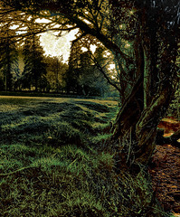 The Magical Glade (torimages) Tags: sd allrightsreserved exmoor donotusewithoutwrittenconsent copyrighttorimages