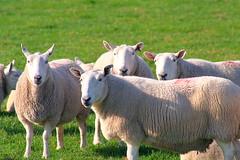 Where are ewe?