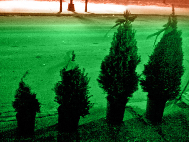 Trees in Brooklyn
