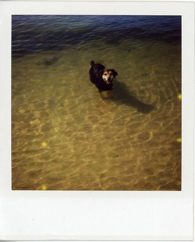 perrito en gamboa