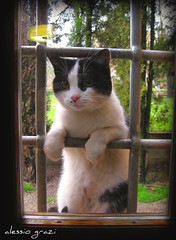let me in...... (alessio grazi) Tags: pet pets cute window nature topf25 cat interestingness amazing eyes kitten bravo kat perfect funny chat colours top adorable gatos best finestra occhi prison most jail felinos felino gatto katzen kot gat koka kedi katt micio viewed verdi favorited faved  prigione sbarre blueribbonwinner cindycrawford firstquality  pisic cc400 cc200 mussi mywinners abigfave kissablekat bestofcats platinumphoto anawesomeshot aplusphoto lifebeautiful superbmasterpiece diamondclassphotographer lmaoanimalphotoaward brillianteyejewel platinumheartaward betterthangood nuvolina alessiograzi