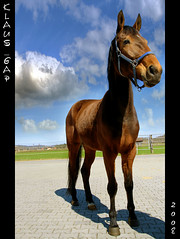 Vicky Bowl @ sunshine (Klaus_GAP - taking a timeout) Tags: horse bayern bavaria photoshopped bluesky frame superbowl pferd blauerhimmel hdr rahmen hdri ineffable themoulinrouge ohlstadt abigfave impressedbeauty oneshothdr frenchtrotter goldstaraward qualitypixels skyascanvas damniwishidtakenthat vickybowl franzsischertraber iwishidtakenit