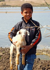 Faces of Morocco (Peace Correspondent) Tags: africa boy portrait beautiful d50 river children child northafrica lovely1 culture goat morocco maroc livestock marruecos marokko fv20 5photosaday views2000 soussmassa coolestphotographers peacecorrespondent