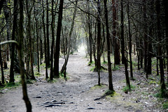 but where will it bring us (-justk-) Tags: trees light copyright path spooky kessel nijlen kesselseheide allmyimagesarecopyrightedallrightsreserveddonotusecopyandeditmyimageswithoutmypermission