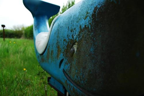 Wheatsheaf - There's a Whale
