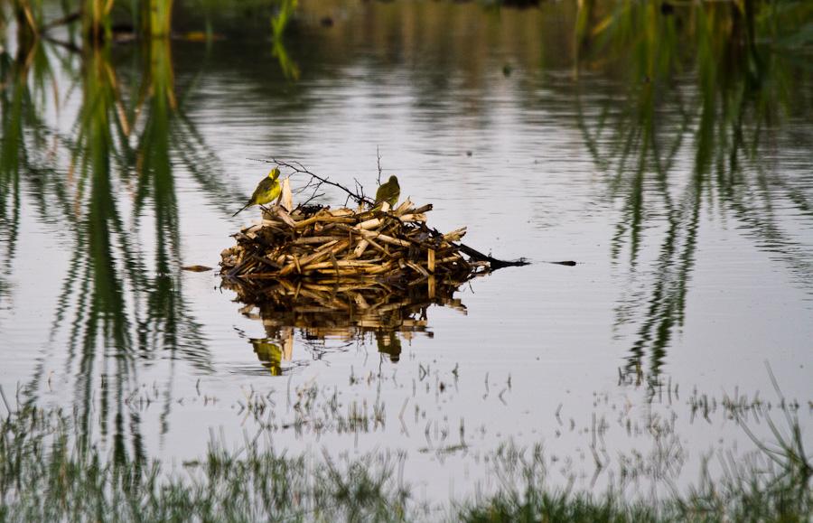 WK en Baie de Somme le 20, 21 et 22 Mai 2011 : Les photos - Page 3 5768529736_1763bdcf89_o