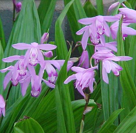 http://gazo.cocolog-nifty.com/my_tiny_flower_garden/images ...