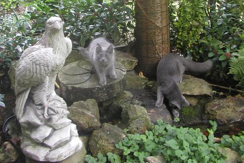 Ladoga's kittens 1859509193_c92b9f0769