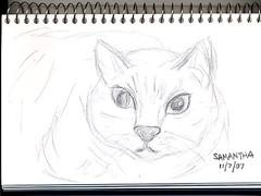 Drawing of my cat Sammy
