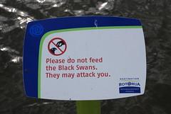 They May Attack You (testpatern) Tags: new newzealand black sign island do rotorua please you north attack may zealand swans signage northisland they te feed aotearoa ikaamaui
