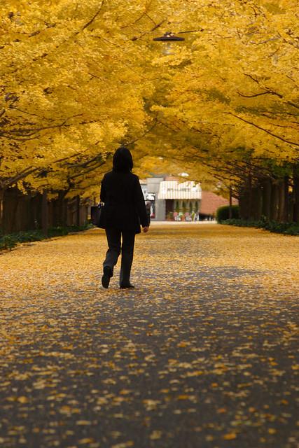 黄金色の並木