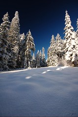 Winter Pines (Dan Sherman) Tags: winter snow oregon portland pines pdx portlandoregon 1020mm pinetrees columbiarivergorge larchmountain mounthoodnationalforest mthoodnationalforest larchmt columbiarivergorgenationalscenicarea mounthoodwilderness mthoodwilderness