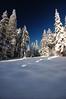 Winter Pines (Dan Sherman) Tags: winter snow oregon portland pines pdx portlandoregon 1020mm pinetrees columbiarivergorge larchmountain mounthoodnationalforest mthoodnationalforest larchmt columbiarivergorgenationalscenicarea mounthoodwilderness mthoodwilderness