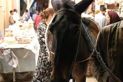 29-Sep-07 - 0111 - Someone walking their donkey through the Fs Medina (Beyond07) Tags: morocco fez fes fs
