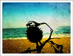 Washed ashore-Imaging (Midhun Manmadhan) Tags: sky beach sand weed imaging s3is