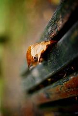leaf storm consciousness (filtran) Tags: autumn 50mm leaf bokeh f14 olympus om10 zuiko questfortherest bokehlicious fujicolor160s urbanmenace