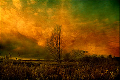 . A Fen Study - Part 4 . (3amfromkyoto) Tags: blue red sky orange tree wet clouds reeds study fallen grasses marsh fen cambridgeshire wetland fenland blown 3amfromkyoto flickr:user=3amfromkyoto