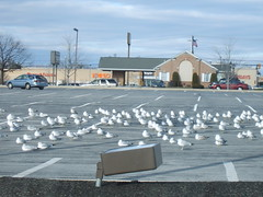 latest dec 001 (toddsaved) Tags: sea wind gulls