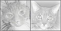 Cats: Spike & Boo