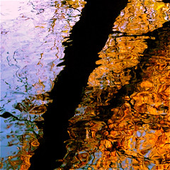 A Wild River Reflection For You jjjohn Thank You!!! :))) (Denis Collette...!!!) Tags: canada reflection tree quebec merc