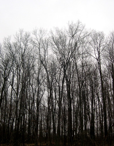 Gray skies, gray landscape