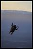 Les parapentes du Saléve (La Croisette - France) (Stéphane Cazalet (Scaz)) Tags: winter sunset sport montagne canon fun bestof hiver favorites vol paragliding savoie 74 parapente hautesavoie glisse scaz cazalet
